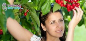 zdrava-ishrana-prednosti-organske-hrane-u-ishrani-trudnica-i-dojilja-clanak-3