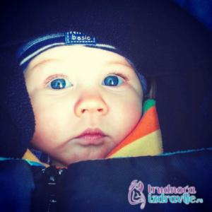 beba-lav-beograd