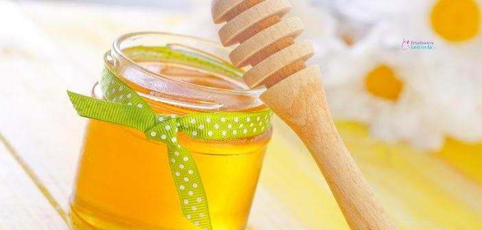Med u ishrani trudnice