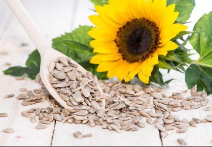 jezgro suncokreta u zdravoj ishrani (1)