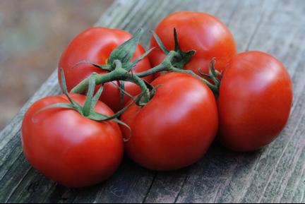 paradajz_ishrana